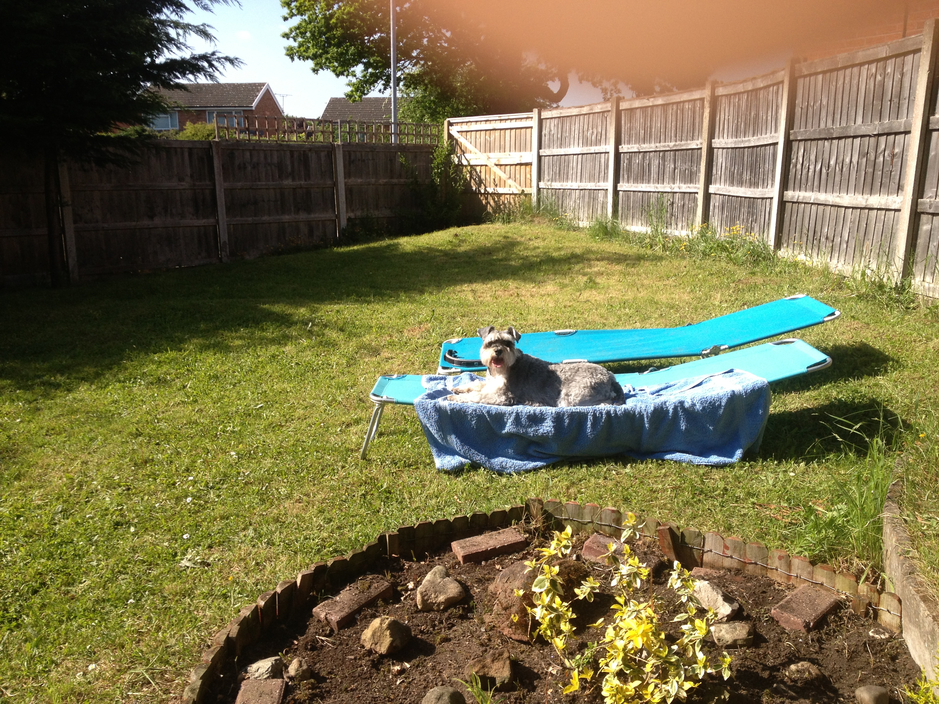 luxury dog hotel covering wrexham wirral chester dog trainer