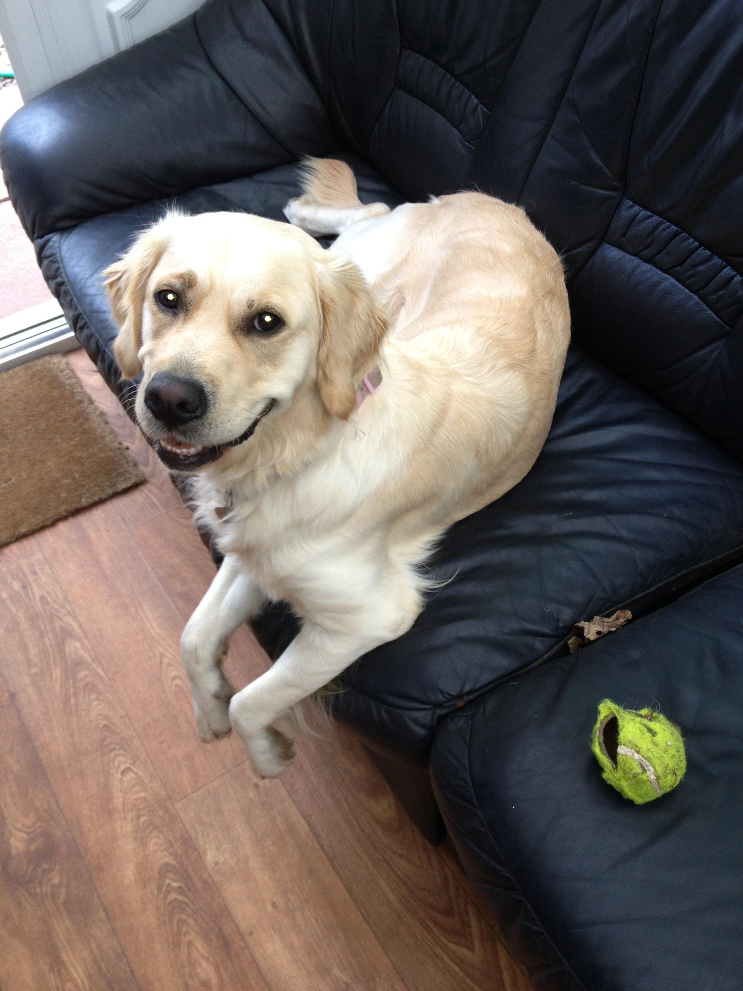 Dog Training Wirral
